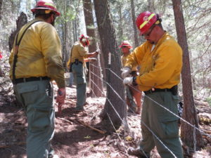 Fire staff help erect fence to protect New Mexico meadow jumping mouse habitat (Photo credit: USDA Forest Service)