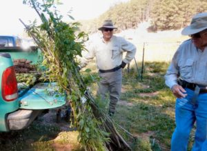 June 4 Volunteer Project: Cebolla Restoration