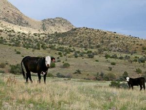 New Mexico Grazing Rights Case Ruling
