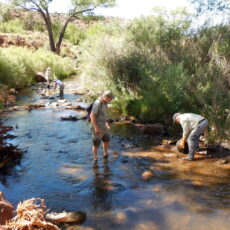New Riparian Restoration Program for Streams on New Mexico National Forests